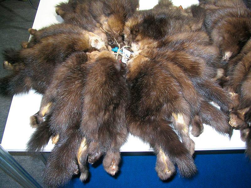 Один из предметов торговли на Руси - соболиный мех